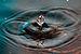 Water Dolphin.jpg