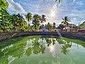 Water vs coconut tree.jpg