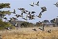 Waterfowl (6203886178).jpg