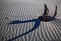 Wharariki Beach area (5795491569).jpg