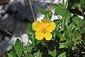 Wild Flower Slovenia 3 (35060353024).jpg