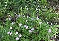WildflowersBarnBluffMN.jpg