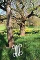 Willowwood Arboretum, Chester Township, NJ - Patriots' Path.jpg