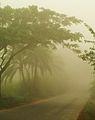 Winter Morning at Chalknazirpur Natore Bangladesh 1.JPG