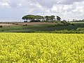 Wolds Farmland - geograph.org.uk - 174372.jpg