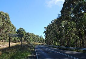 Wombat State Forest.JPG