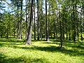 Woods of Valberg - panoramio.jpg
