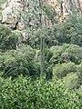 Yagur – Nesher, the Green Path – Mount Carmel 045.JPG