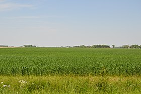 Yankee Road wheat field.jpg