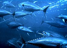 Photo of a few dozen fish swimming in dark water
