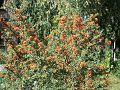 Yerevan Botanical Garden 1n (14).jpg