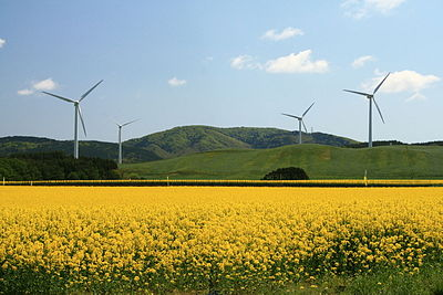 Yokohama wind farm.jpg