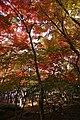 Zuihoji park05s3872.jpg