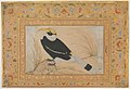 """Great Hornbill"", Folio from the Shah Jahan Album MET DP246533.jpg"