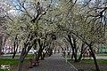 (((مناظر پارک ملت مراغه))) - panoramio (1).jpg