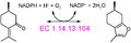 (+)-menthofuran synthase reaction.PNG