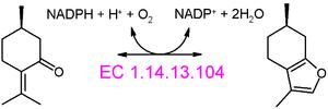 Menthofuran - Menthofuran synthase converts pulegone to menthofuran