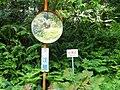 (Other), Awashimaura, Iwafune District, Niigata Prefecture 958-0061, Japan - panoramio (6).jpg