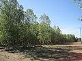 Árboles 3 Bercianos.jpg