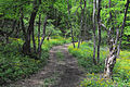 Агармишський ліс 2010.JPG
