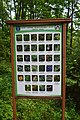 Ботанічний сад НУБіП DSC 0529.jpg