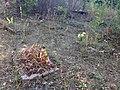Військове кладовище Шульгівка.jpg
