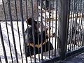 """Зоопарк """"Роев ручей"""" (027).JPG"""