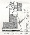 Иллюстрация к статье «Ассирийские войны» № 2. Военная энциклопедия Сытина (Санкт-Петербург, 1911-1915).jpg