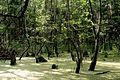 Комариное болото - panoramio.jpg