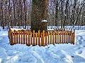 Кочубеївські Дуби у Регіональному ландшафтному парку «Диканський» 2.jpg