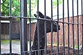 Московский зоопарк. Фото 18.jpg