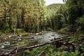 Река Богунай, осень, Евгений Сафонов, 1.jpg