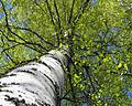Сергиевка 2007 05 18.jpg