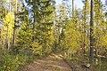 Тропами Медведского бора.jpg