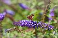 Цветок ботанического сада 02.jpg