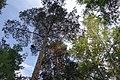 Черняевский лес, участок за ДКЖ 5.jpg