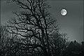 Այս գիշեր ես երկար նայեցի երկնքին.jpg