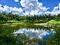 করমজলের কুমির প্রজনন কেন্দ্র, সুন্দরবন।.jpg