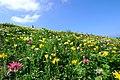 オーンズ春香山ゆり園(Onze Harukayama lily garden) - panoramio (4).jpg