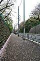 世田谷通り Setagaya Dōri - panoramio.jpg