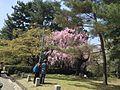 京都御所 - panoramio (3).jpg