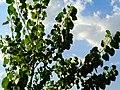 未央 机场线旁的树木与小路 01.jpg