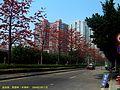 益田路 英雄树 木棉树 kapok - panoramio.jpg