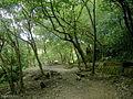 翠湖步道1.JPG