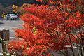 高の瀬峡の紅葉.jpg