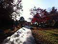 전남대학교 도서관길목 ^2 - panoramio.jpg