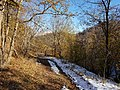 -Forest near Fioletovo village S-N 06.jpg