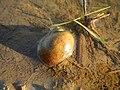 02647jfBalucuc Pulilan Rice Paddy Roads Apalit Pampangafvf 12.JPG