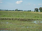 03306jfBirds Sanctuary Ducks Wetland Marshes Rice Fields Candaba Pampangafvf 20.JPG