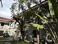 0422jfSanto Niño Barasoain Church Garden Malolos City Bulacanfvf 11.JPG